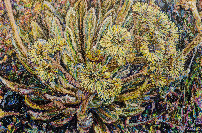 Frailéjon en Flor #9