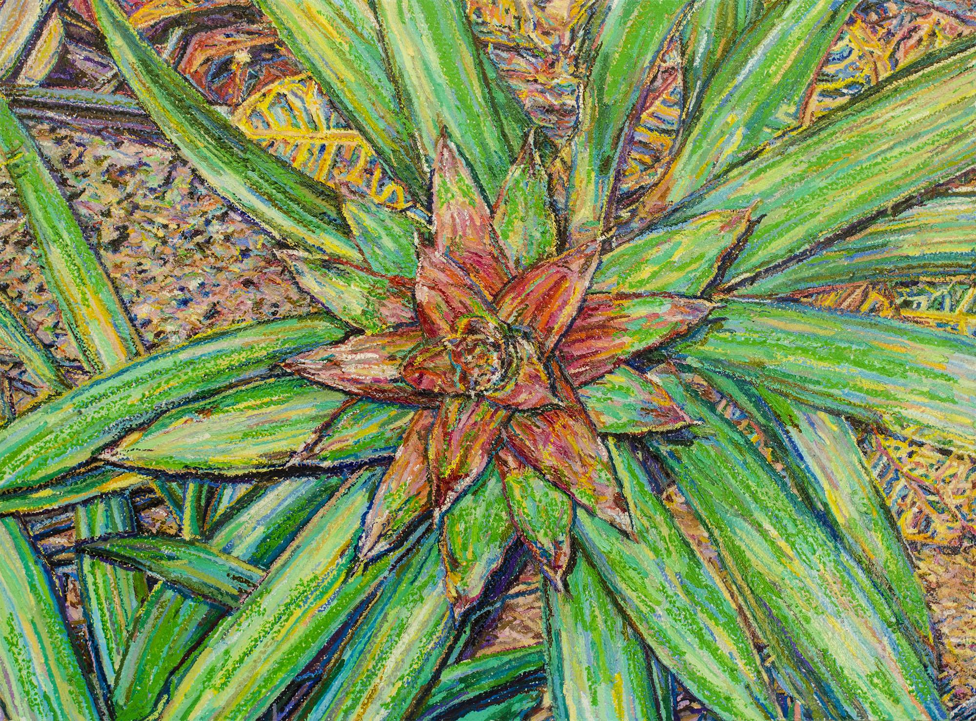 Bromelia #1
