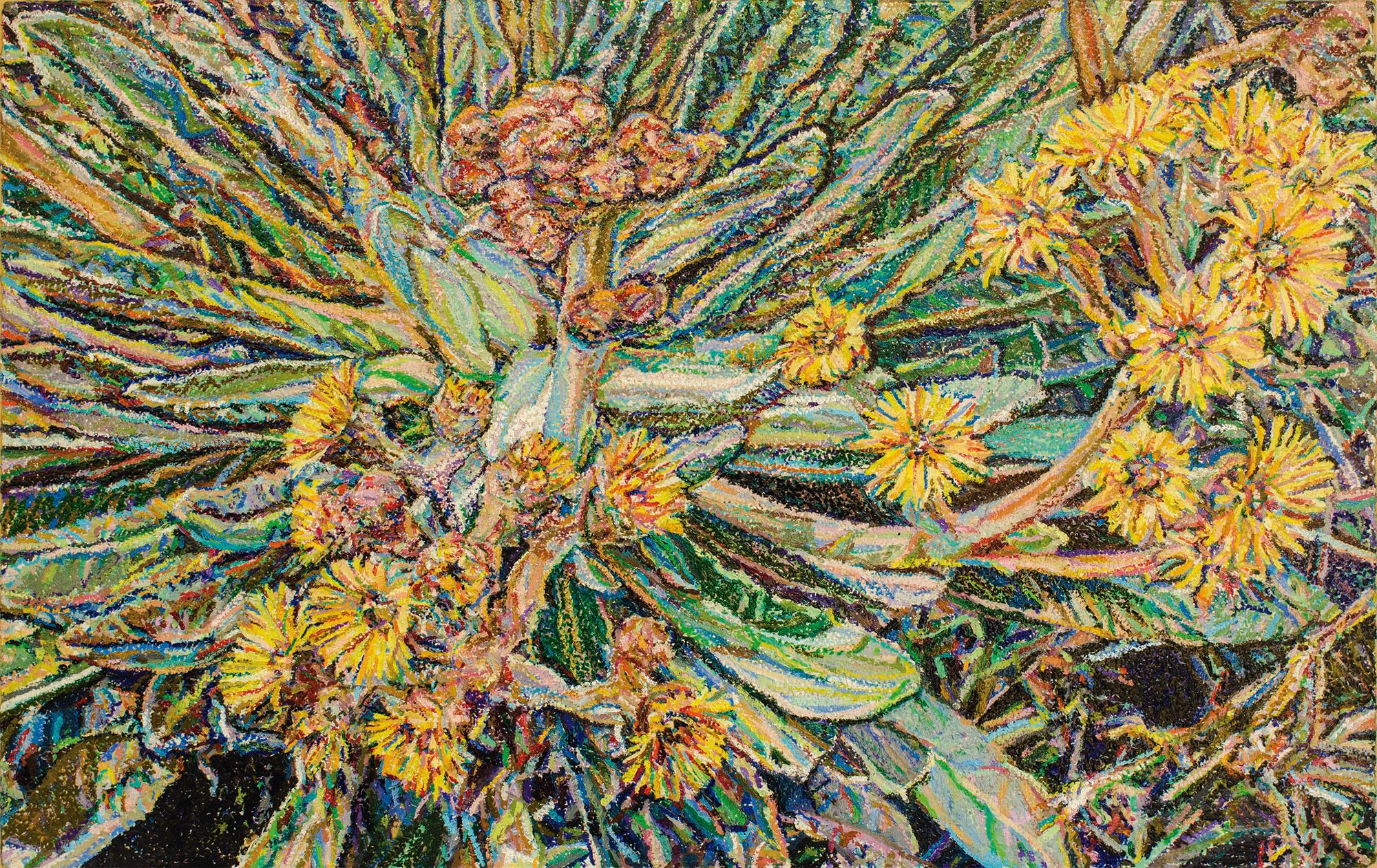 Frailéjon en flor #7