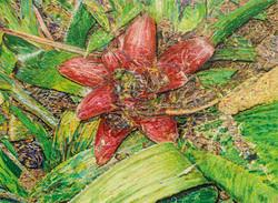 Bromelia #4