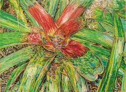 Bromelia #3