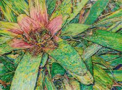 Bromelia #2