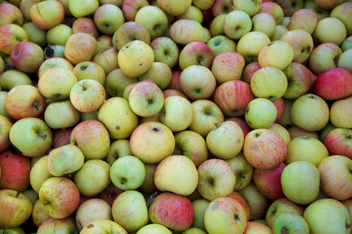 Pommes Idared