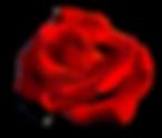 rose3.png