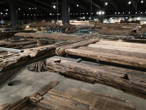 Научная конференция «Археологическое дерево»