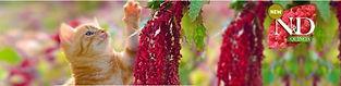 ND Quinoa Banner.jpg