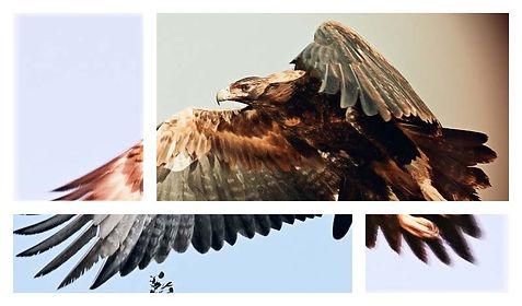 eagle final.jpg