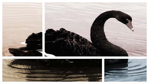 black swan final.jpg