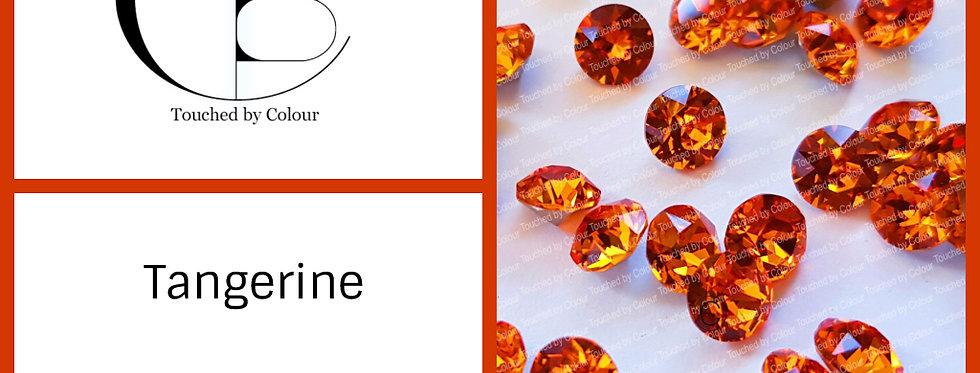 Tangerine - Chaton