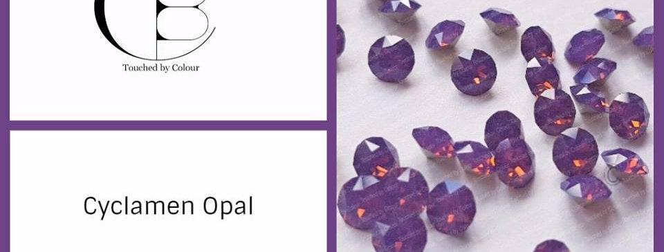 Cyclamen Opal - Chaton