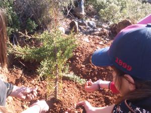 Η καλύτερη στιγμή να φυτέψουμε ένα δέντρο ήταν ... σήμερα!