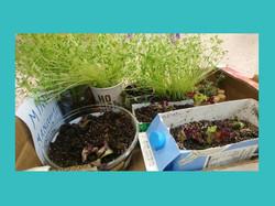 Ο κήπος της ανακύκλωσης