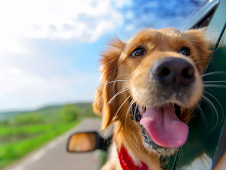 Sample Dog Obituary