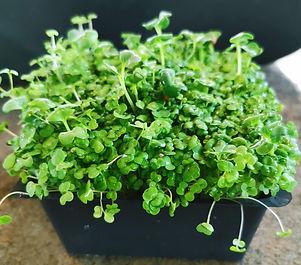 brocolli-blend-harvest.jpg