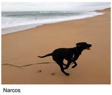 Courrir sur la plage.. c'est super !