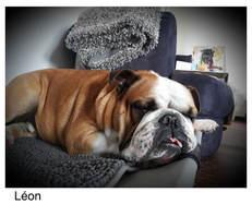On dors bien au doux canin !