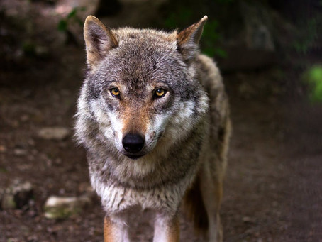 The Theory of Wolfslayer: Jerry Falwell, Jr., Liberty University, and an Important Life Principle
