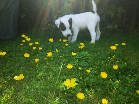 Meet Edie!