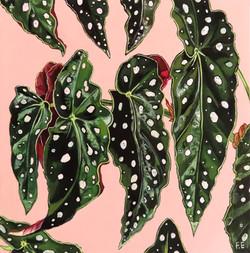 begonia leaves 2