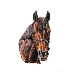 horse michelle web