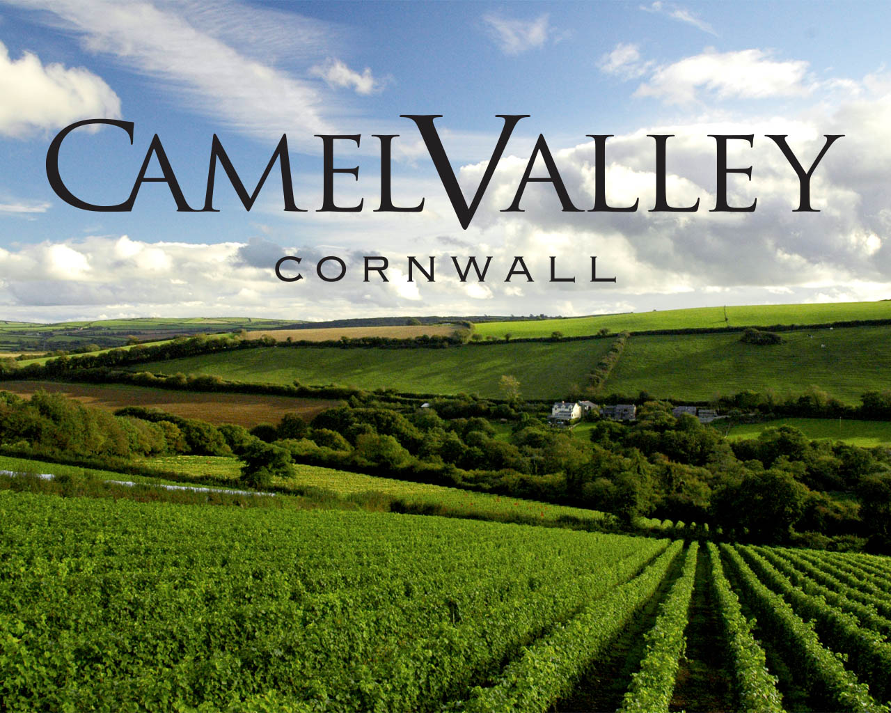 Camel Valley Vine Yard