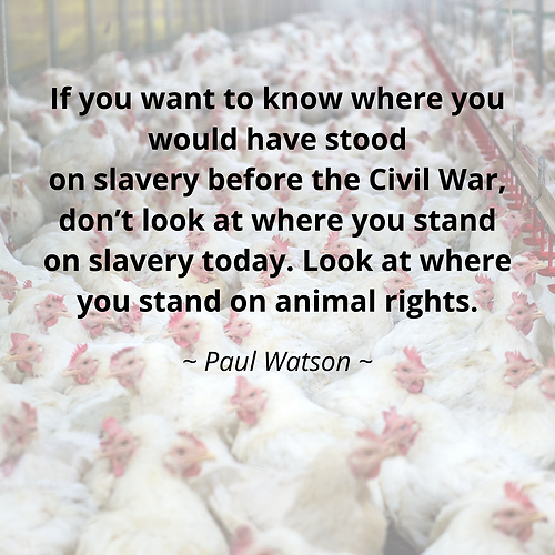 Paul Watson Quote.png