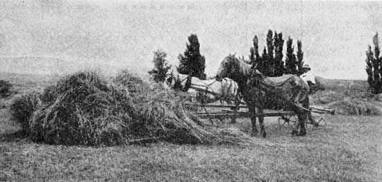 3-sam-1219-Horse-Sweep-Rake jpg.jpg