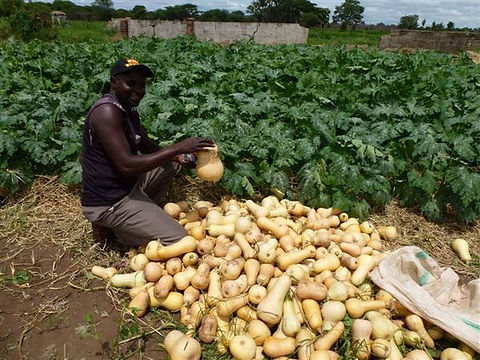 Agriculture 04.jpg