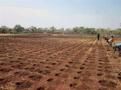 Agriculture 06.jpg