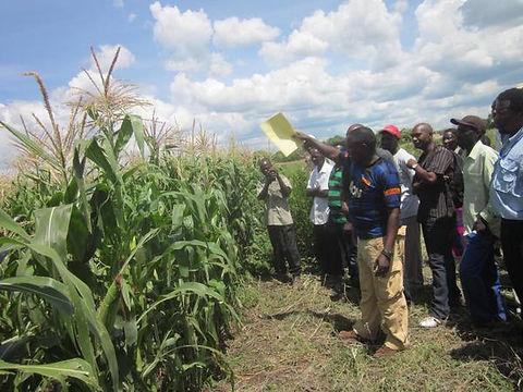 Agriculture 03.jpg