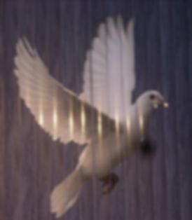 White Dove.png
