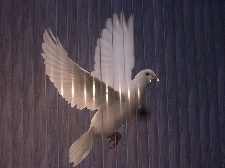 White Dove.png