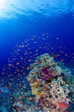 Erika_Shark Reef_5