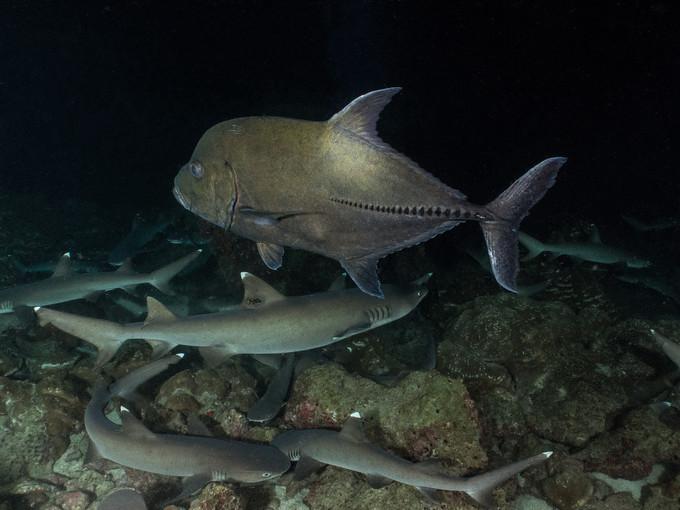 Cocos Island: mergulhos em outra dimensão