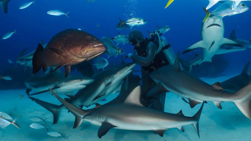 Shark dive com Unexso