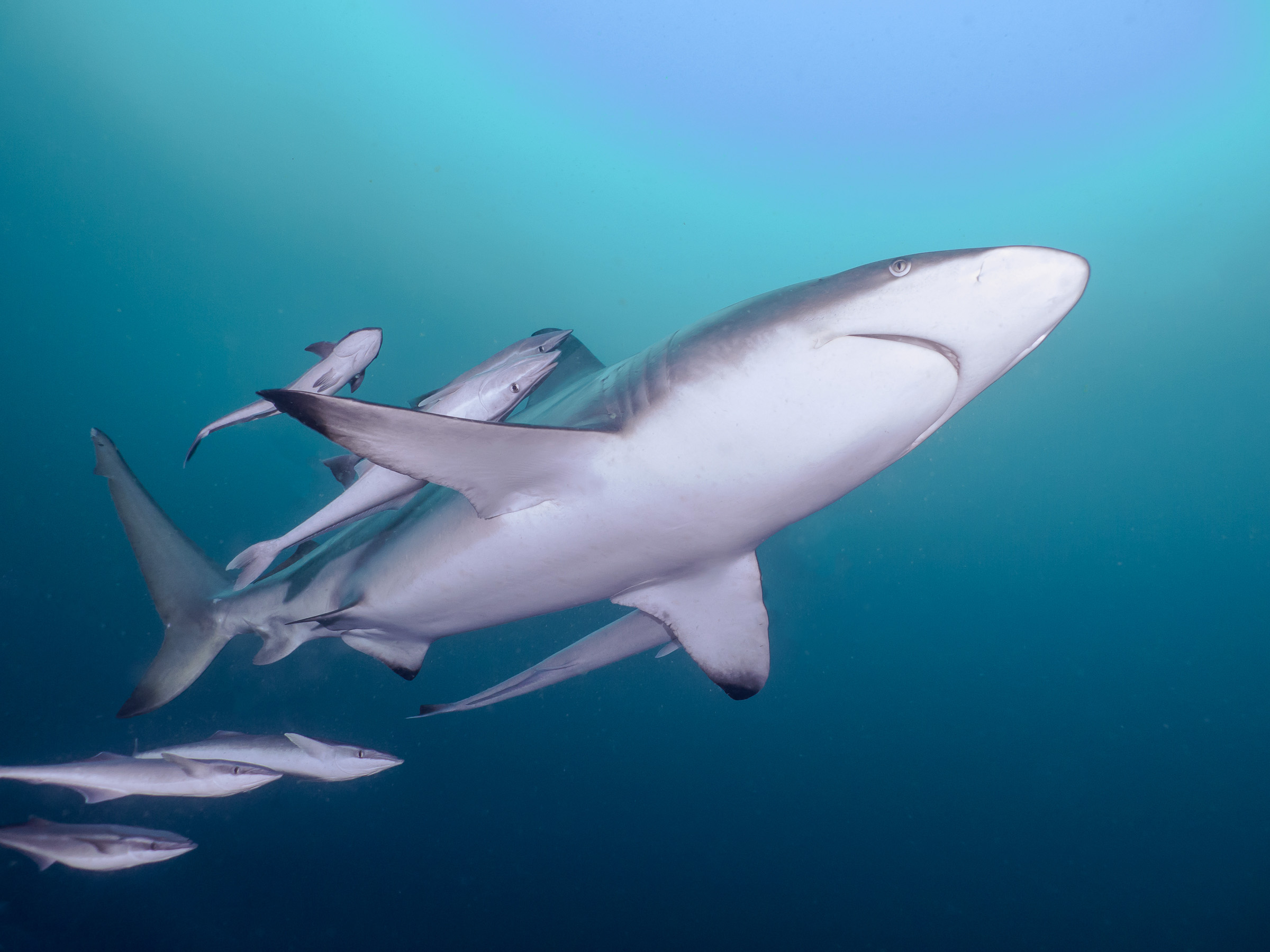 Erika - Umkomaas - Shark Dive 2