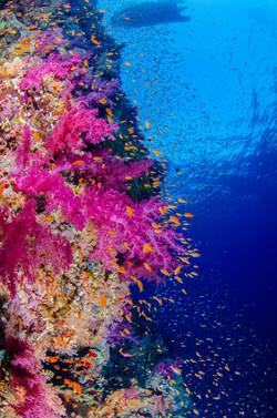 Erika_Shark Reef_2