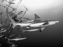 Erika - Umkomaas - Shark Dive 1