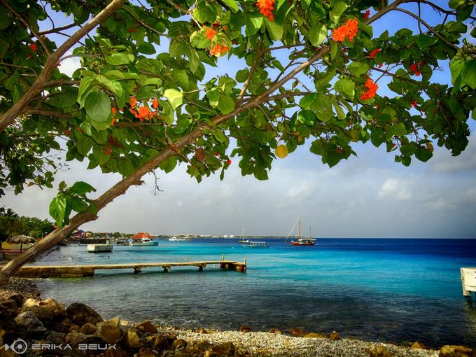 Bonaire: um verdadeiro paraíso do mergulho de praia.