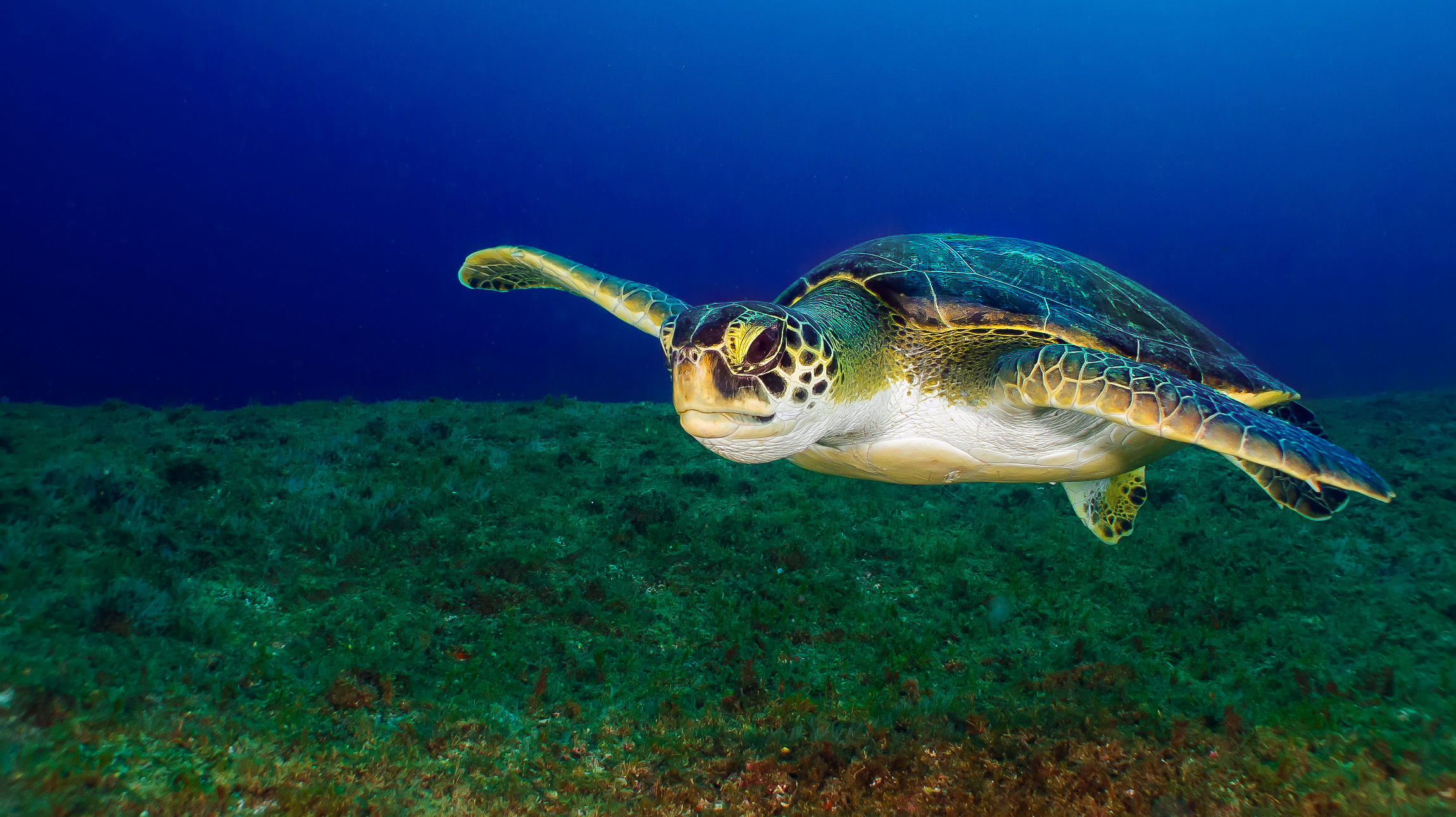 tartaruga verde laje de santos