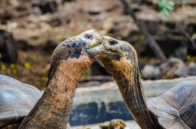 Galápagos – O paraíso de Darwin sem gastar muito.