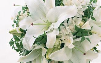 www.easyvn.net--40-nice-white-flowers-wallpapers--037.jpg