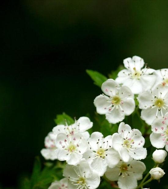 www.easyvn.net--40-nice-white-flowers-wallpapers--028.jpg