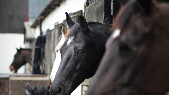 Horse Livery Stables