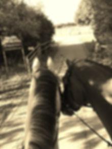 Driveway at AP Equestrian