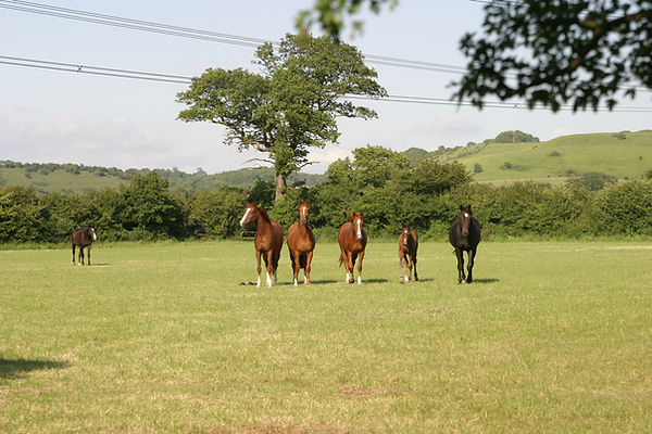 Mares & foals in fields at Ford Farm.JPG