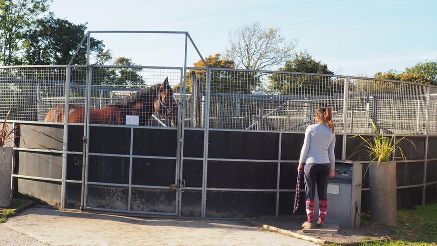 Claydon Horse Walker