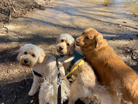 Dog Friendly Parks and Trails in Leesburg VA!