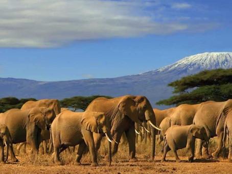 Distinct and Unique African Coffee: Tanzania - The Coffee World in Mount Kilimanjaro