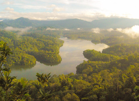 Balance with Commercial and Environmental Protection - the Rainforest Alliance Certification in CRA